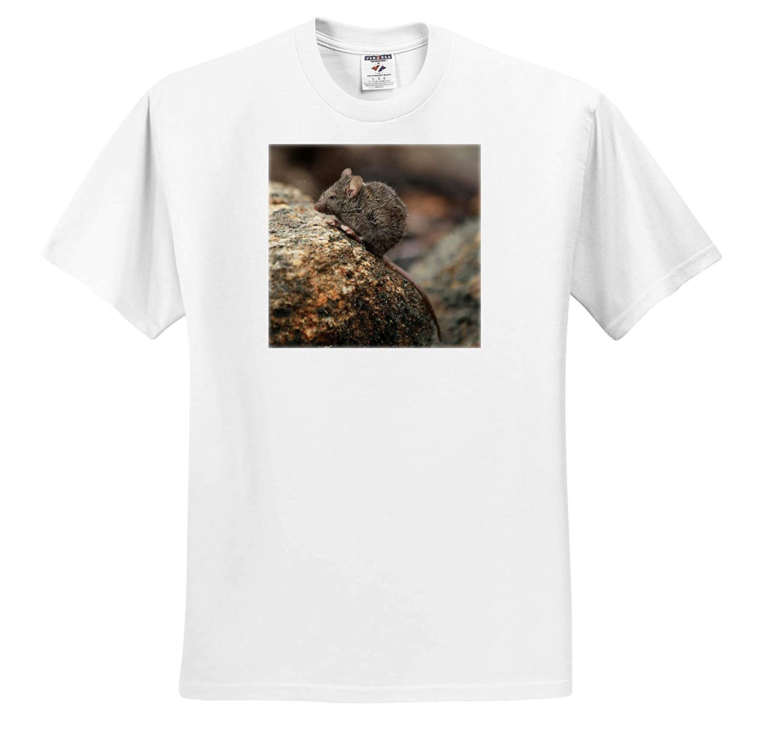 Animals Close up Photograph of a Field Mouse on a Moss Covered Boulder 3dRose Stamp City - T-Shirts