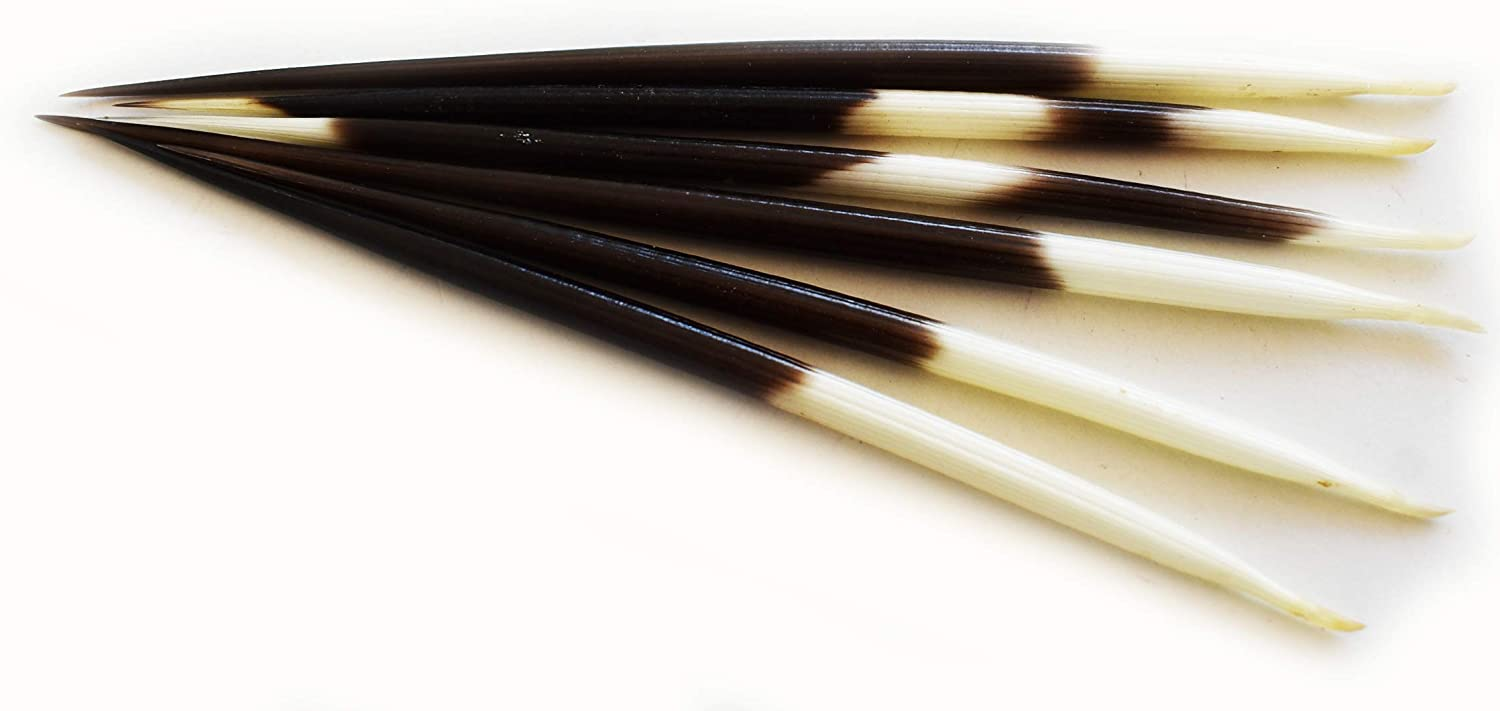 5-7 Set of 3 African Porcupine Quills Handpicked Decor Hobby Indian Crafts Hair Sticks