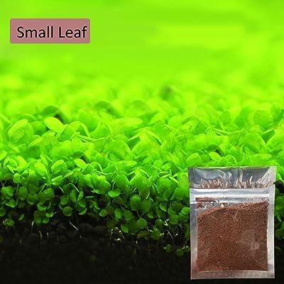NANCY99 Fish Tank Water Grass Seed Leaflet Water Grass Fish Tank Plant Decoration: Pet Supplies
