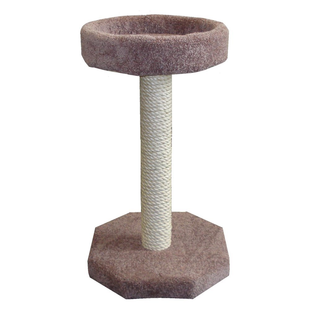 Amazon.com : Molly And Friends Cat Scratching Post With Bed, Brown : Pet  Supplies