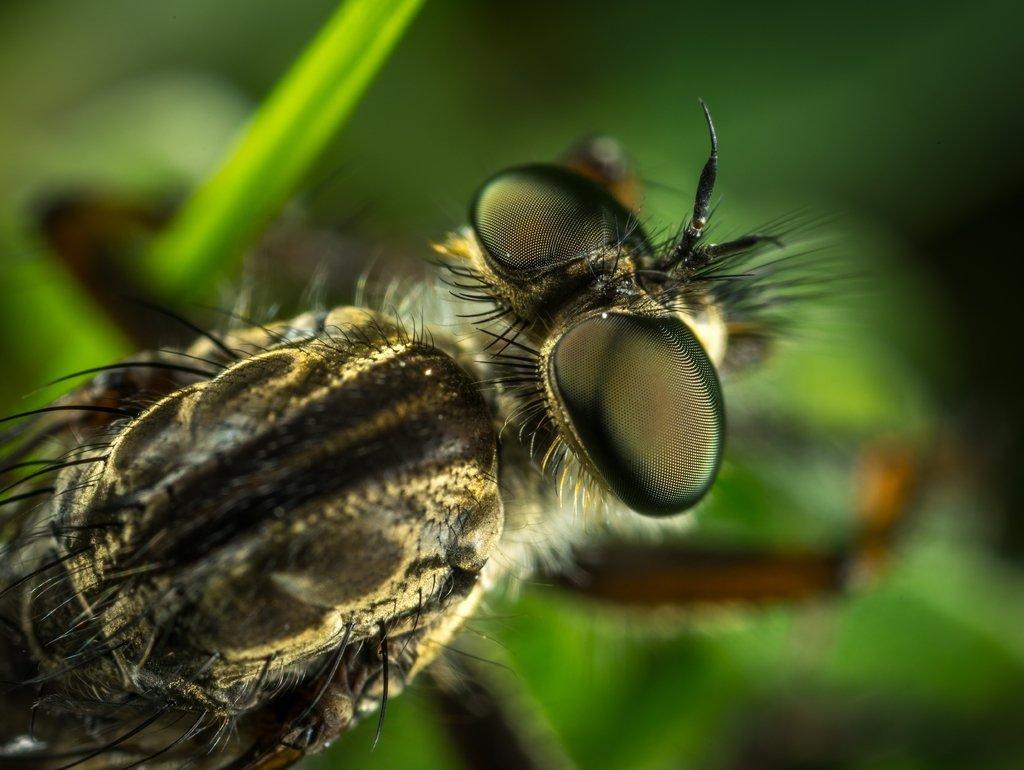Lais Lais Lais Puzzle Insekt 2000 Teile eea703