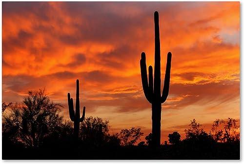Saguaros Amazing Sunset 5