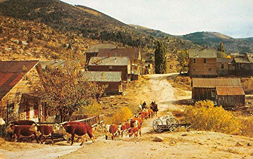 Silver City Idaho Ghost Town Cattle Street View Vintage Postcard K92864