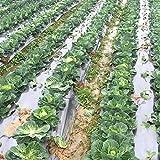 OriginA 1 mil Plastic Mulch, Garden Mulch, Plastic Microporous Film, Strawberry Tomato Weed Control Polyethylene, Silver,6 Holes,Hole Dia 2.36'',5x50ft