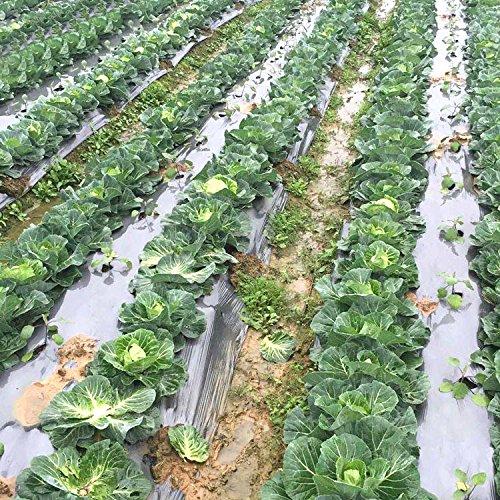 - OriginA 1 mil Plastic Mulch, Garden Mulch, Plastic Microporous Film, Strawberry Tomato Weed Control Polyethylene, Silver,6 Holes,Hole Dia 2.36