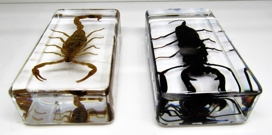 Real insects Scorpion set in crystal clear resin with information card on gift box