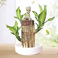 Mini Brazilian Wood Hydroponic Stump Plants Groot Lucky Wood Potted Lovely Desktop Greenery (5-6cm)