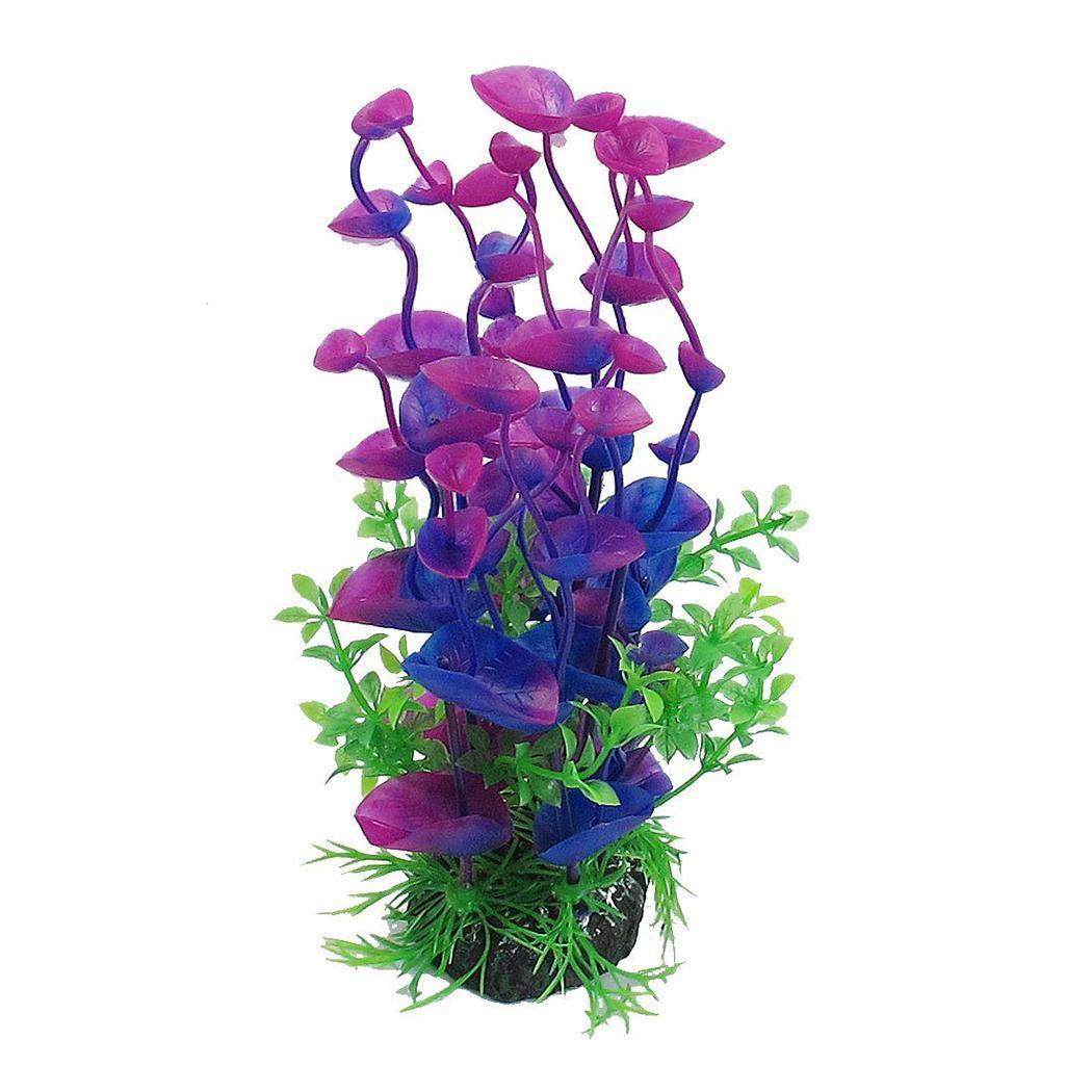 pianta acquario per pesce