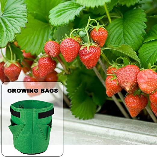 Maceta de tela para cultivo de patatas, bolsa para plantar tomates ...