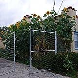 Mongolian Giant Sunflower (Helianthus annuus) 5 Rare Organic Heirloom Seeds