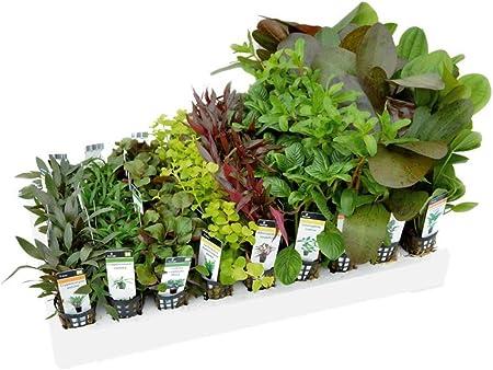 24 Pots 100L Tank Mixed Box of Aquarium Plants