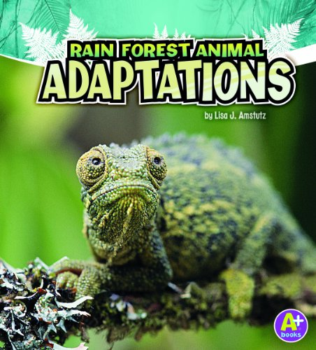 Rain Forest Animal Adaptations (Amazing Animal Adaptations)