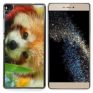 "Qstar Arte & diseño plástico duro Fundas Cover Cubre Hard Case Cover para Huawei Ascend P8 (Not for P8 Lite) (El panda rojo"")"