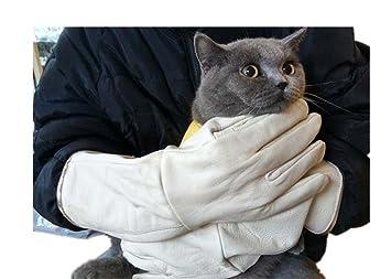 Dbtxwd Guantes De Manipulación De Animales Para Gato Perro Pájaro Serpiente Loro Lagarto, Anti-Mordedura/Arañazos Guantes De Protección De Animales Salvajes ...