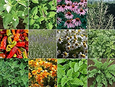 David's Garden Seeds Collection Set Herb Medicinal 19 Varieties HSM876 (Multi) 6000 Seeds (Open Pollinated, Organic)