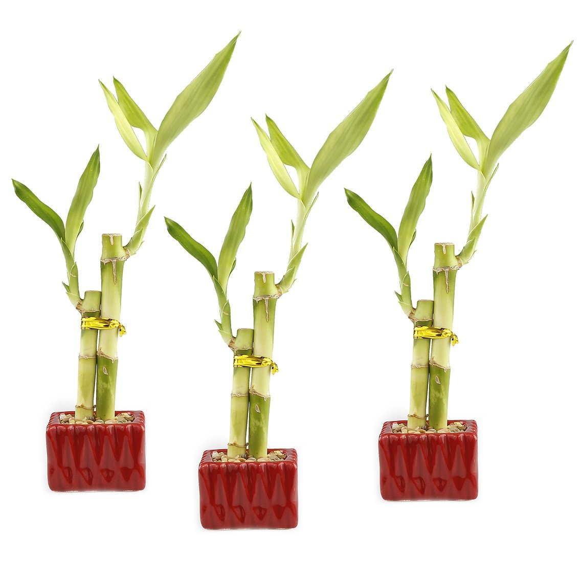 NW Wholesaler - Lucky Bamboo ''Love'' Two Stalk Arrangement with Square Accented Pot (Set of 3, Red)