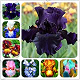Seed Plant Flower Rare Seeds New 2018!50 pcs Bonsai Iris Flower Perennia Flower Garden Rare Flower Flores Bearded iris plantas, Nature Plants Orchid Flower (Mix Color)