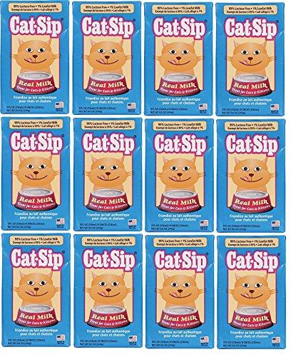 Cat Sip Milk Reviews