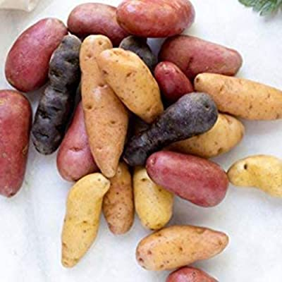 BYyushop 500Pcs Mixed Potato Seeds Garden Delicious Vegetable Farm Field Plant for Planting Outside Door Nursery Pot Cooking Fingerling Potato Seeds : Garden & Outdoor