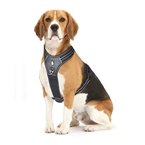 61OhLko4dAL._SX466_ amazon com front range dog harness no pull chest harness with
