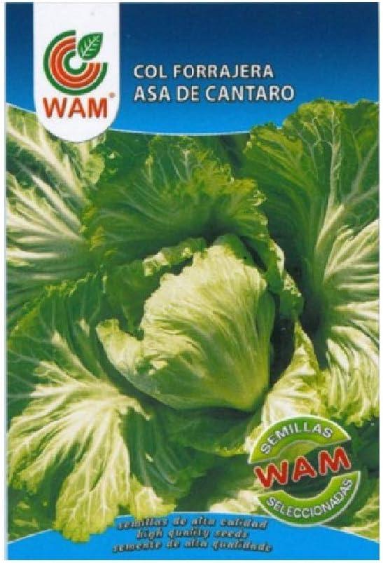 Semillas de Col Forrajera Asa de Cántaro - Sobre con 8 gr.