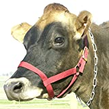 Intrepid International Cow Halter - Yearling Red