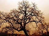 Home Comforts LAMINATED POSTER Bare Oak Tree Fog Gnarled Old Oak Twilight Big Tree Poster 24x16 Adhesive Decal