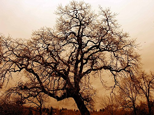 Gnarled Tree - Home Comforts LAMINATED POSTER Bare Oak Tree Fog Gnarled Old Oak Twilight Big Tree Poster 24x16 Adhesive Decal