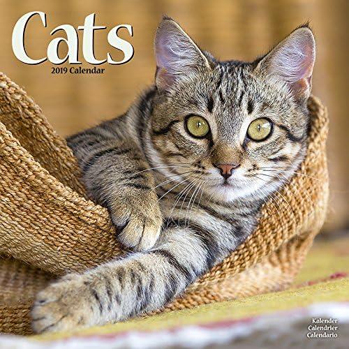 Calendario 2019 gatos todos colores – gatito – gato – gato de gouttiere – Roux + incluye un – Agenda de bolsillo 2019: Amazon.es: Oficina y papelería