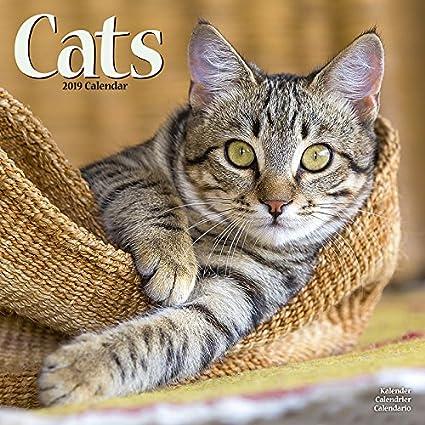 Calendario 2019 gatos todos colores – gatito – gato – gato de ...