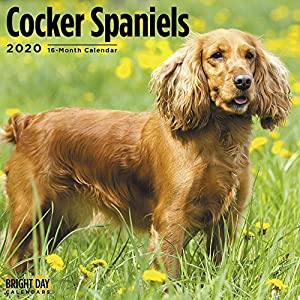 2020 Cocker Spaniels Wall Calendar by Bright Day, 16 Month 12 x 12 Inch, Cute Dogs Puppy Animals Adorable 7