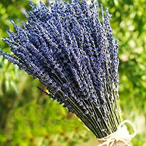 "TooGet Lavender Dried Ultra Blue Bundles(16"" - 18"" Long) for Home Decor, Crafts, Gift,Wedding or Any Occasion 3"
