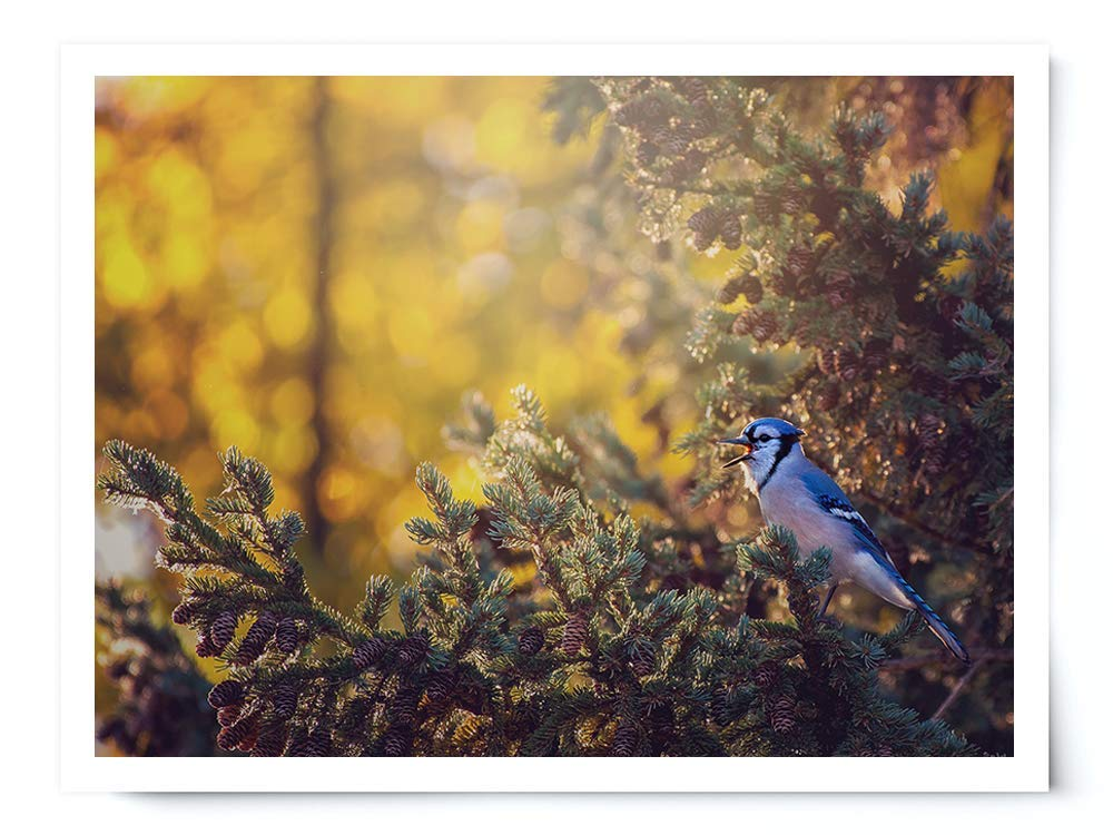 Autumn Blue Jay - Wildlife Photograph Animal Picture Home Decor Wall Nature Print - Variety of Size Available