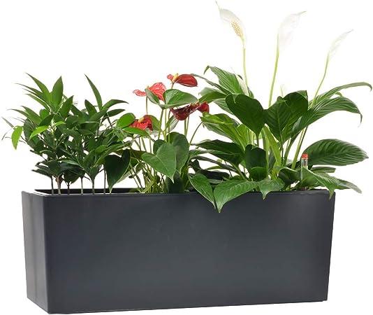 GardenBasix self watering Planter pots with 10 Quarts Coconut soils Discs product image