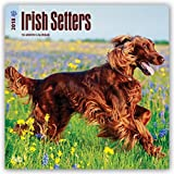 Irish Setters 2018 12 x 12 Inch Monthly Square Wall Calendar, Animals Irish Dog Breeds (Multilingual Edition)