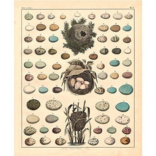 Meishe Art Poster Print Retro Vintage Birds Nests Eggs Collection Identification Reference Chart Beautiful Home Wall Decor