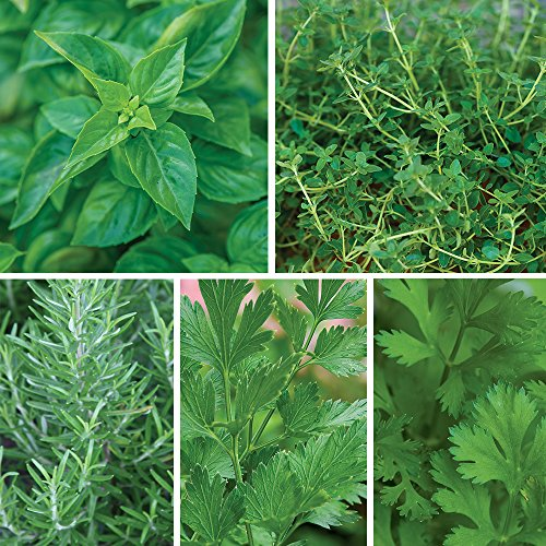 - Burpee Windowsill Herb Collection Seeds 5 packets of seed.