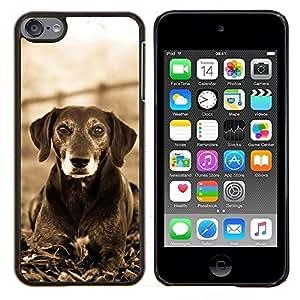 EJOOY---Cubierta de la caja de protección para la piel dura ** Apple iPod Touch 6 6th Touch6 ** --Mutt Negro Terrier Hound Dog Canine Blanca