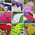 Qenci Seeds - 100pcs Cress Seeds Creeping Thyme Seeds Perennial Climbing Plant Ground Cover Flower Garden Decoration