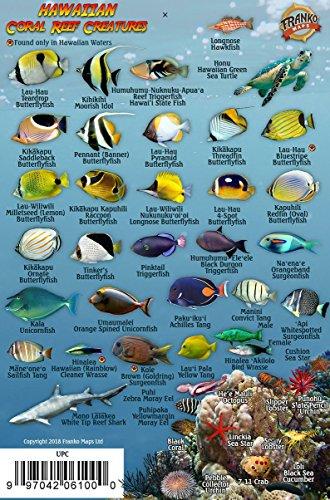 Franko's Hawaiian Islands Mini Fish Card (Hawaii Reef Fish)