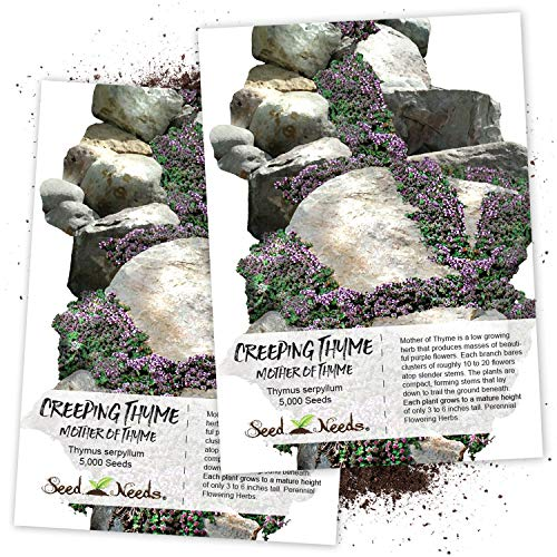 Seed Needs, Mother of Thyme/Creeping Thyme (Thymus serpyllum) Twin Pack of 5,000 Seeds Each