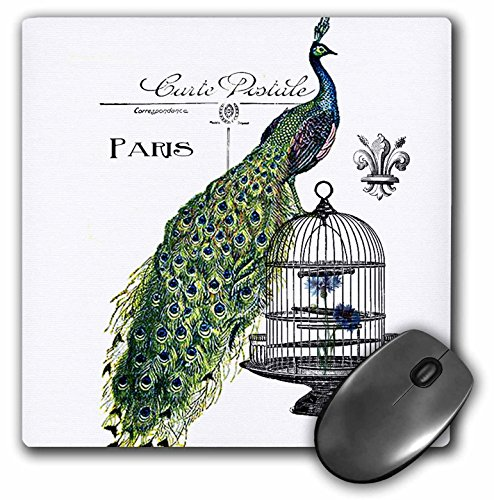 Price comparison product image 3dRose LLC 8 x 8 x 0.25 Inches Mouse Pad, Paris Peacock On Bird Cage (mp_178821_1)