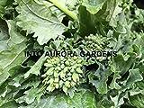 Broccoli Rabe Rapini Organic Seeds Cima Di Rapa