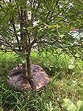 Finnhomy Tree Watering Bag Tree Watering Ring