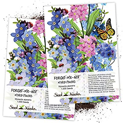 Seed Needs, Forget-Me-Not