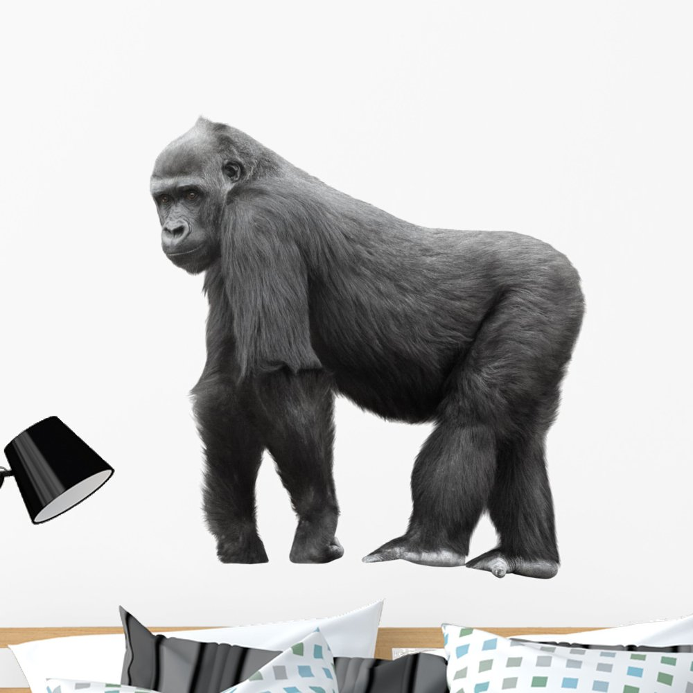Wallmonkeys Silverback Gorilla Background Wall Decal Peel and Stick Graphic WM83317 18 in H x 18 in W