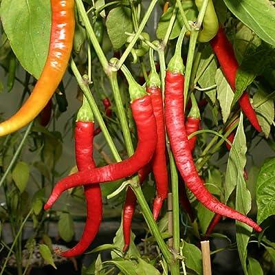 Aci Sivri Hot Pepper 10+ Seeds : Garden & Outdoor