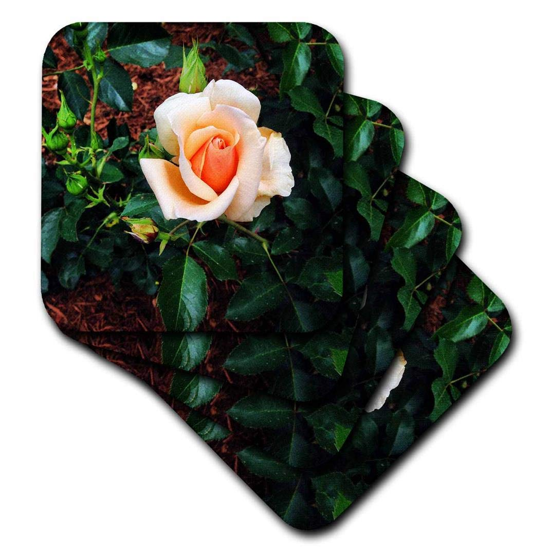 3dRose CST/_202000/_1 Peach Colored Rose Soft Coasters Set of 4