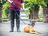 TRAINING Blue Color Coded L-XL Semi-Choke Dog