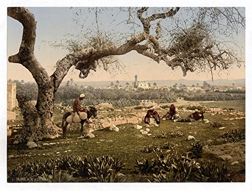 Historic Photos View from Southwest, Lydda, Holy Land, (i.e. Israel) by Historic Photos